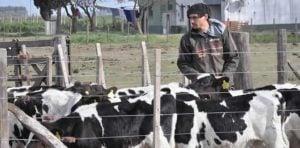 tambo vaca peon
