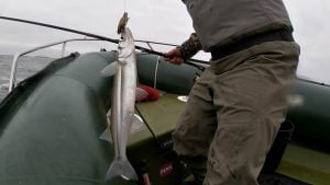 pesca pescado
