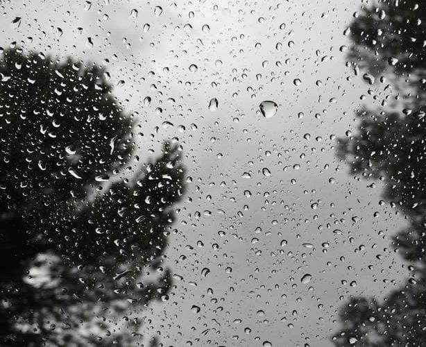 lluvia arboles