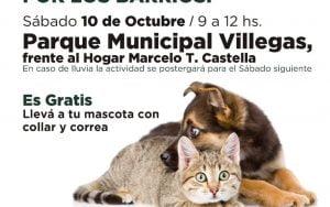 flyer vacunacion perros y gatos