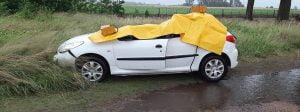 auto arbol