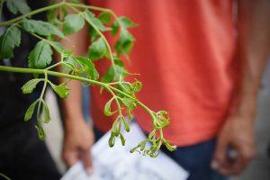 planta contaminacion