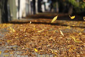 otono hojas