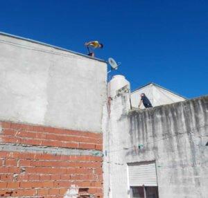 procedimiento techo