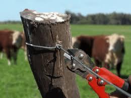 vaca alambrado